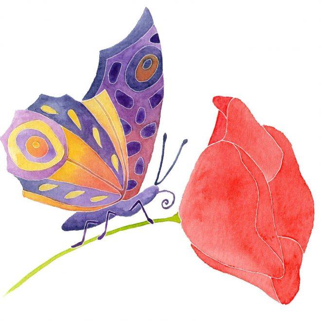 Vlinder op Klaproos WL
