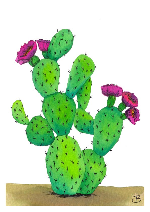 Cactus bloom A6